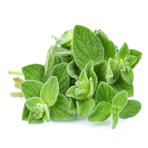 Oregano Essential Oil 1oz