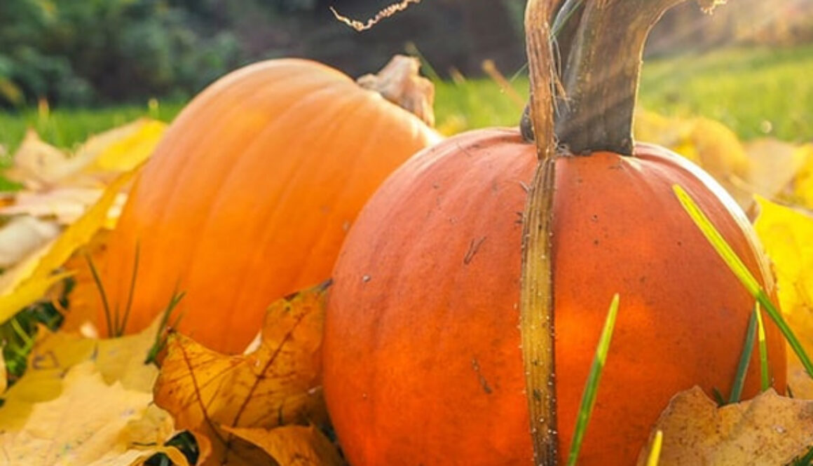 truth-about-pumpkin-article-image